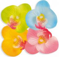 Pétales fleur