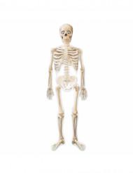 Squelettes gonglable Mr Bones Halloween