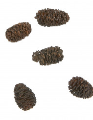 12 mini pommes de pin marron 3 cm