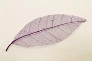 12 feuilles naturelles prune