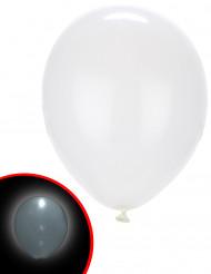 5 Ballons LED blancs Illooms ®
