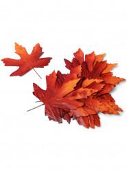 12 Décorations feuilles d'automne