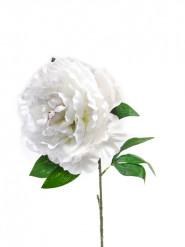 Fleur artificielle Pivoine 80 cm