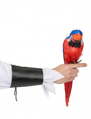 Perroquet des îles Hawaï