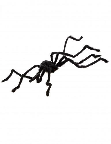 Araignée velue Halloween