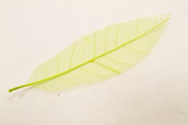 12 feuilles naturelles vertes