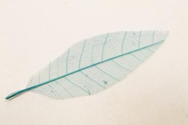 12 feuilles naturelles turquoise