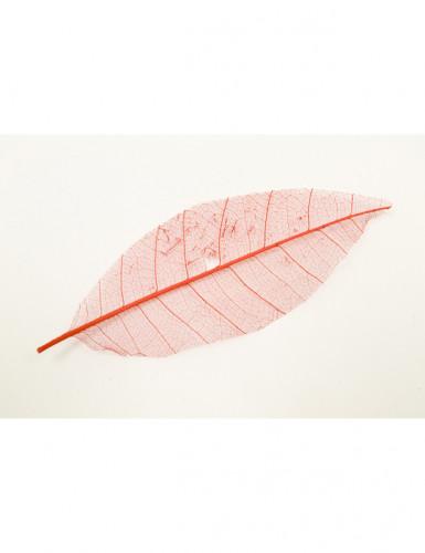 12 feuilles naturelles rouge