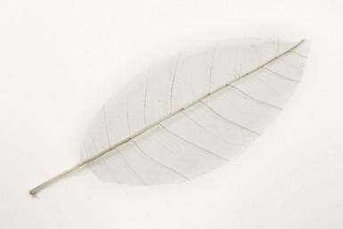 12 feuilles naturelles grise