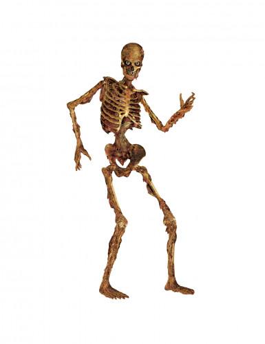 Décoration squelette articulé en décomposition Halloween 180 cm