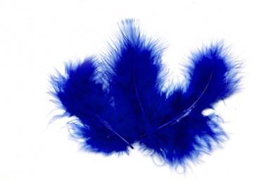 20 Plumes de décoration bleu roi