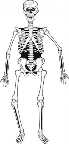 Squelette articulé en carton Halloween 140 cm