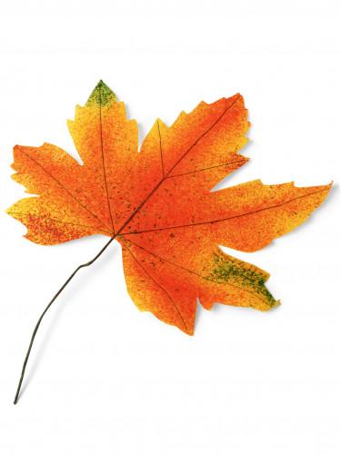 Grande feuille d'automne 35 cm