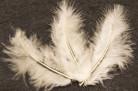 20 plumes de décoration ivoire