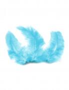 20 plumes de décoration turquoise