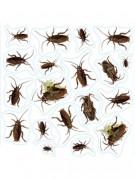 Autocollants insectes