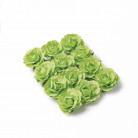 12 Roses à piquer anis