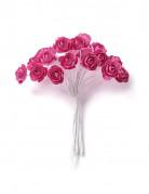 24 Mini roses fuchsia sur tige