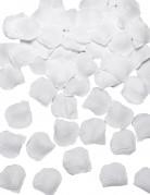 110 Pétales de rose en tissu blanc