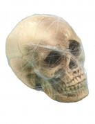 Décoration crâne avec toile d'araignée