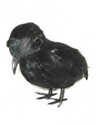 Corbeau plumes noires 20 cm