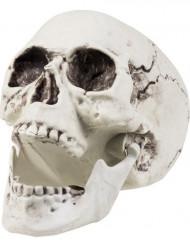 Décoration crâne 24 x 18 cm Halloween