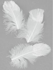 20 Plumes blanches pailletées 9 cm