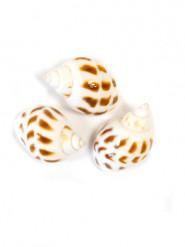 6 Petits coquillages de décoration