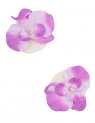 2 Orchidées flottantes parme