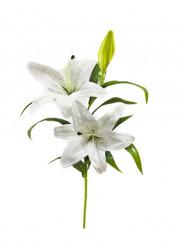 Fleur artificielle Lys 80 cm