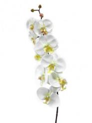 Fleur artificielle Orchidée 85 cm