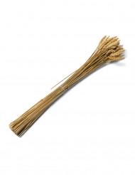 Bouquet d'épis de blé naturel 60 cm