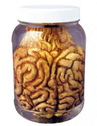 Bocal avec cerveau Halloween 14 cm