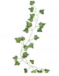 5 Guirlandes feuilles de lierre 2 m