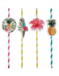 8 Pailles en carton Tropical Paradise