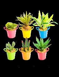 Succulent en pot métal 10 x 18 cm aléatoire