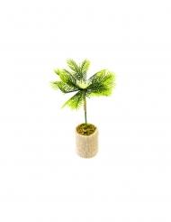 Palmier dans son pot jute 18 x 6 cm