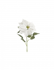 Tige de poinsettia en velours blanche 71 x 24 cm
