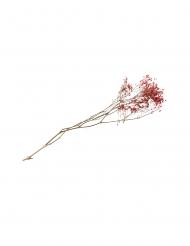 Bouquet de gypsophiles séchées rose 25 g - 80 cm