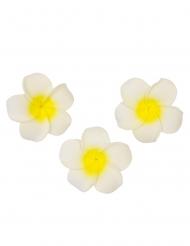 6 Fleurs de monoï artificielles blanches 5 cm