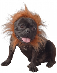 Déguisement lion pour chien