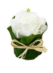 Rose blanche dans un pot en feuillage 8 x 6 cm