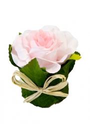 Rose dans un pot en feuillage 8 x 6 cm