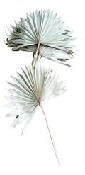 10 Feuilles de palmier blanches naturel 55 cm