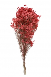 Bouquet de statice roses séchées 60 cm - 80 g