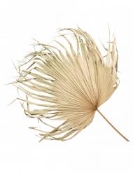 Feuille de palmier séchée 82 x 55 cm