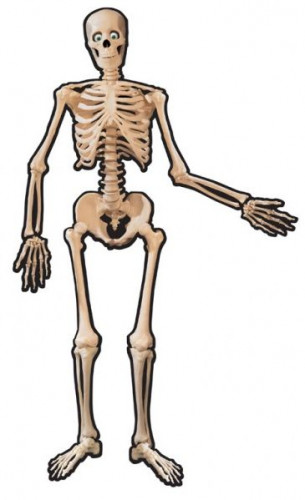 Squelette en carton Halloween 1.4 m