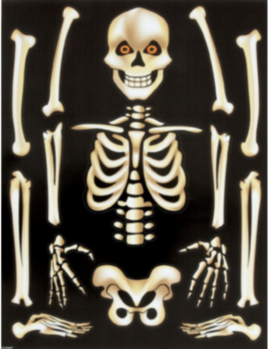 Autocollants pour fenêtres Squelette Halloween