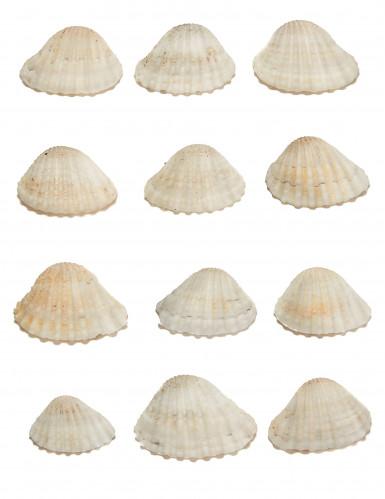 12 Coquillages de décoration en plastique 3 x 2,5 cm