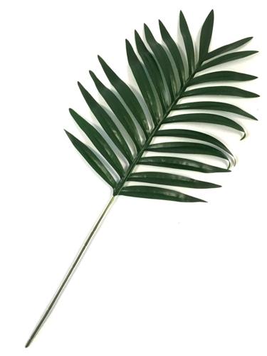 Feuille de palmier phoenix 60 cm